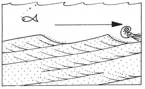 Lower: Geophantasmogram to show how cross-bedding forms in sand. Prevailing westerly dips of the cross-bedding in the caves and adjacent quarries and outcrops indicate tidal currents flowing from Redhill to Guildford, some 120 million years ago.