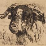 Charles Collins, Ram's Head