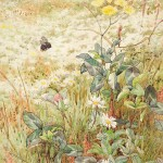 GE Collins, Wild Flowers