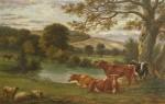 Boxhill - River Mole - Cows