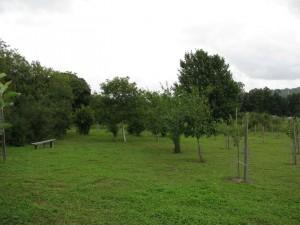 Dorking Community Orchard 1