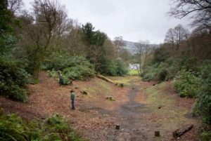 Deepdene Gardens 2014 © Mole Valley District Council