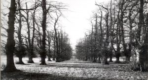 Lime Avenue leading to Bethworth Castle 1960 © Dorking Museum